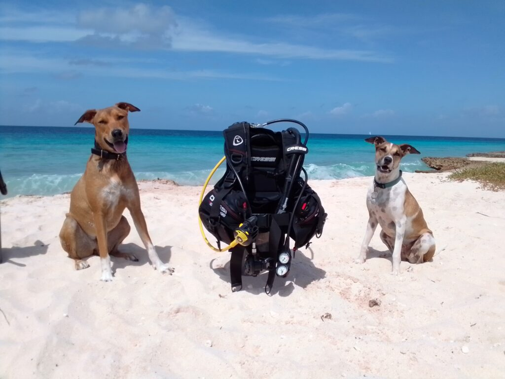 Dogs and Gear